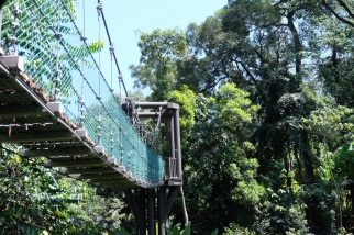 KL Forest Eco-Park_Canopy Walk_4