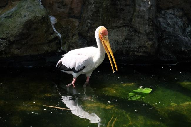 KL_Bird Park_1