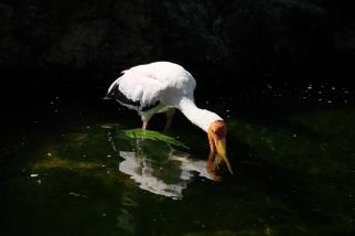 KL_Bird Park_2