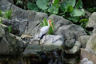 KL_Bird Park_4