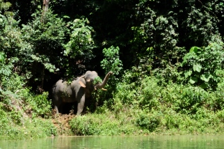 Belum Elephant 3