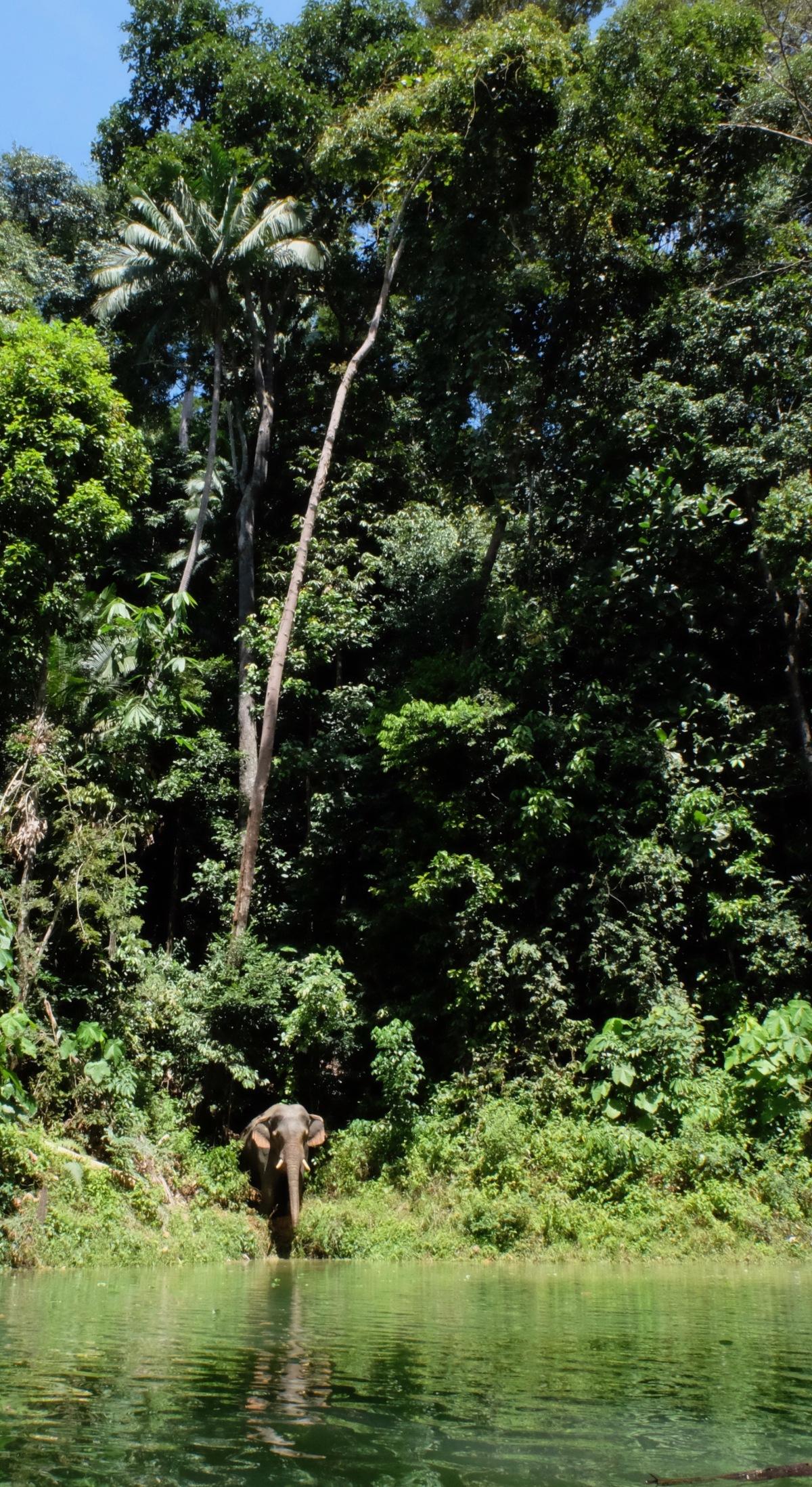 Belum Elephant wade view