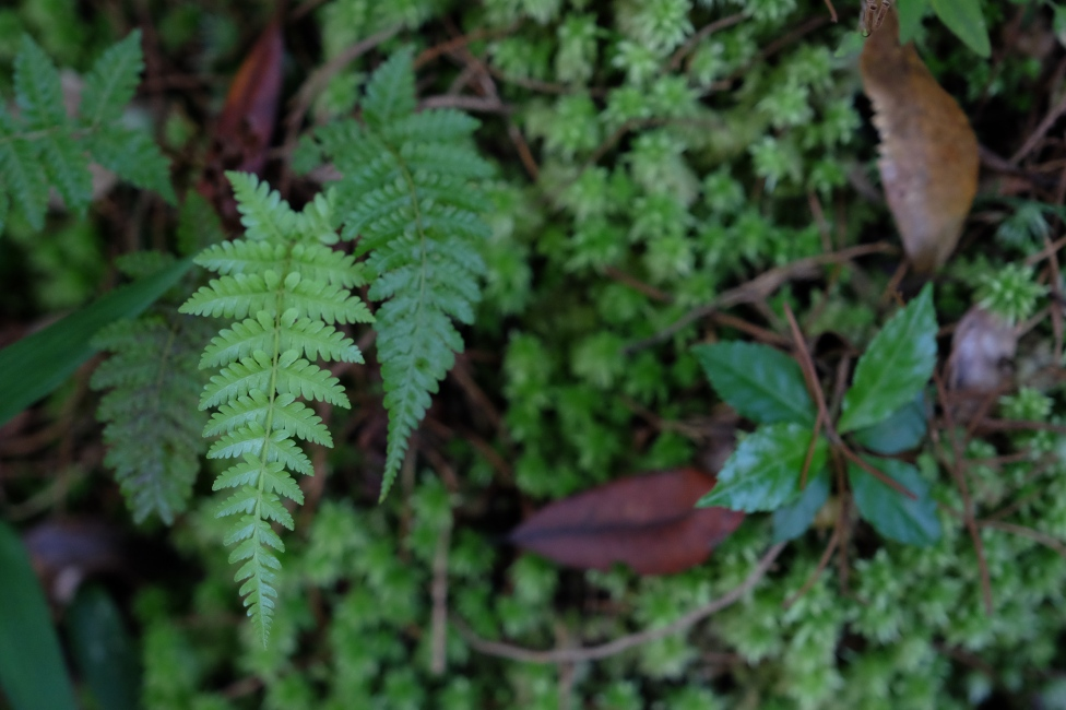 Ferns and lichen at the Habitat, Penang
