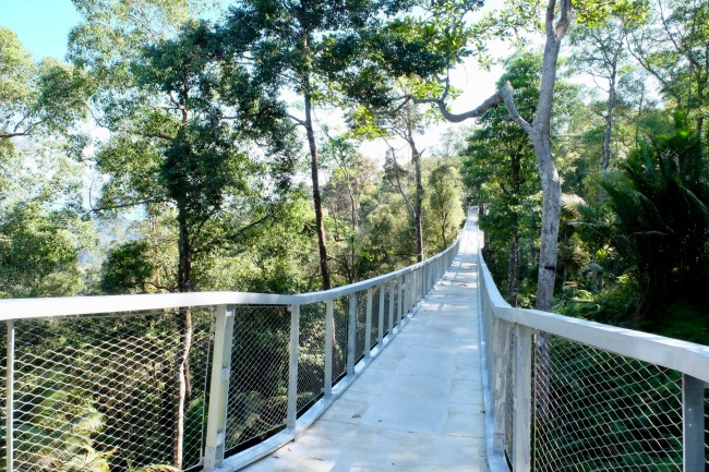 "New ""Langur Way"" canopy walk at the Habitat, Penang"