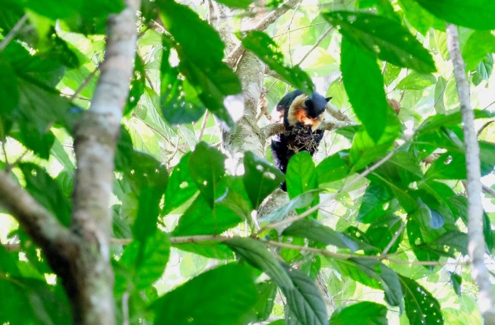 The Habitat Black Squirrel 2