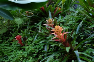 The Habitat - Flora