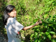 Evelyne Teh Thiry - Sales & PR Manager - Tropical Spice Garden - explaining uses of plants.