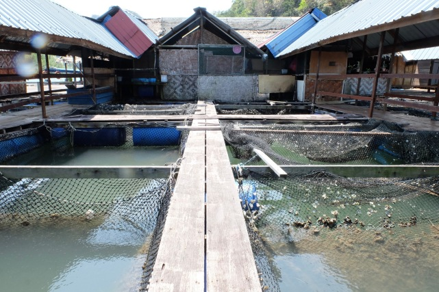 Fish Farm - Restaurant 1