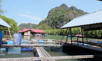 Fish Farm - Restaurant 4