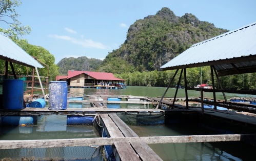 Fish Farm - Restaurant 5