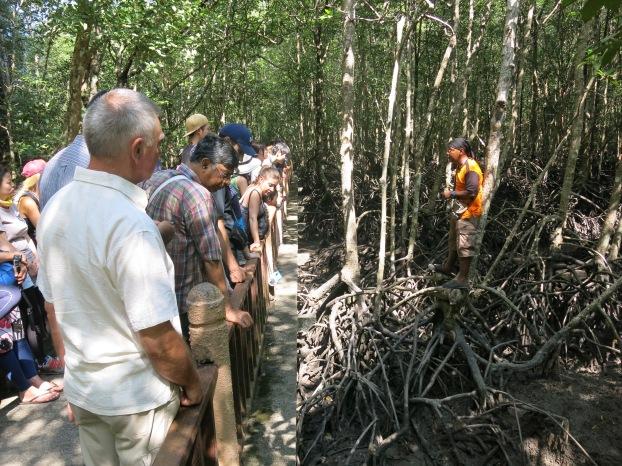 Mangrove tour - Langkawi