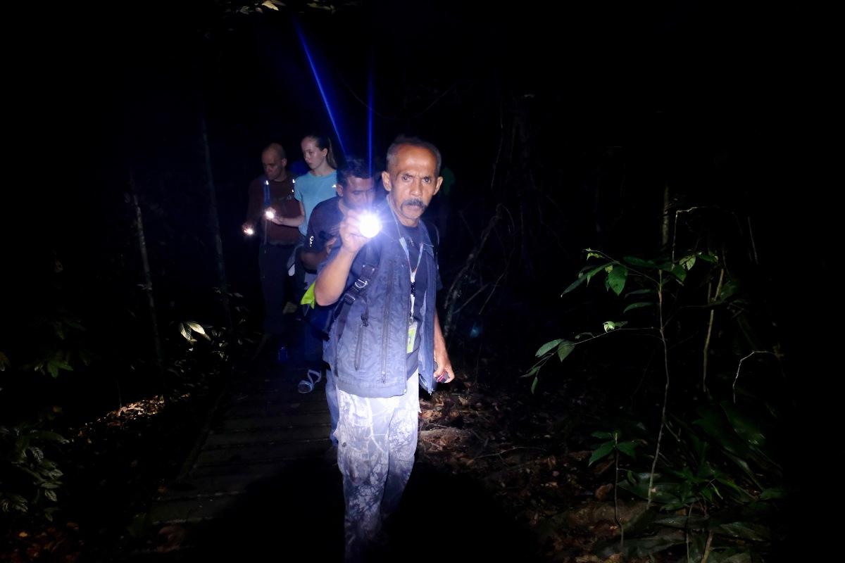 Night walk in rainforest
