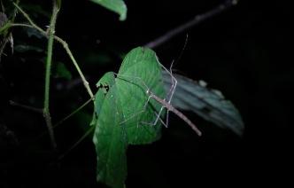 Taman Negara Nightwalk - fauna