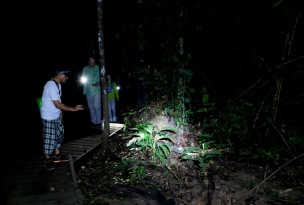 Taman Negara rainforest night walk