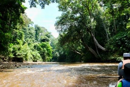 Taman Negara River Boat - rapids