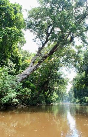 Taman Negara River_2