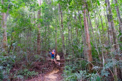 Tourists in Taman Negara Rainforest