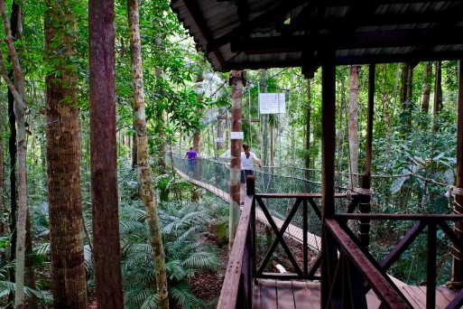 Tourists in Taman Negara Rainforest - canopy walk