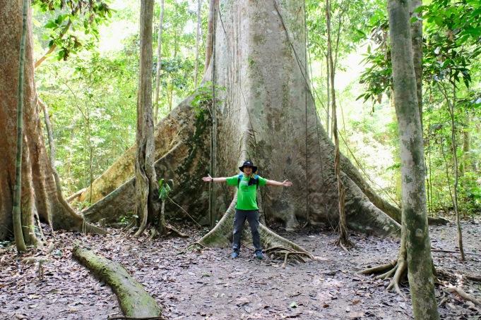 Tualang tree_1