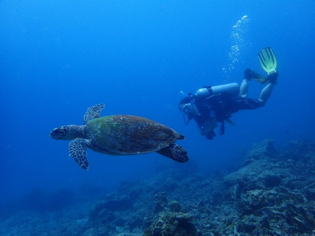 Marine fauna at Perhentian - photo credit: Below The Surface Dive Centre