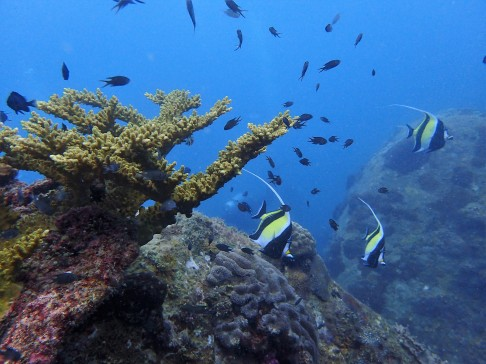 "Marine fauna at Perhentian - photo credit: ""Below The Surface Dive Centre"""