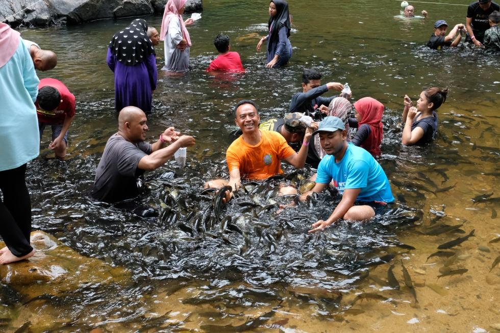 Kenyir fish 2
