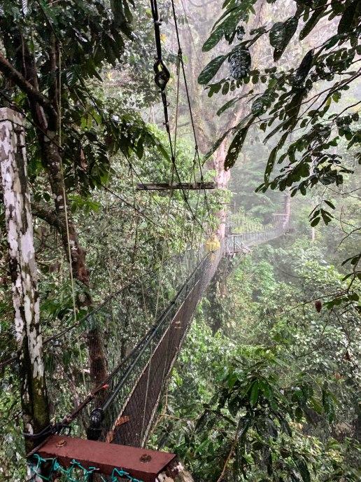 Mulu Canopy Walk