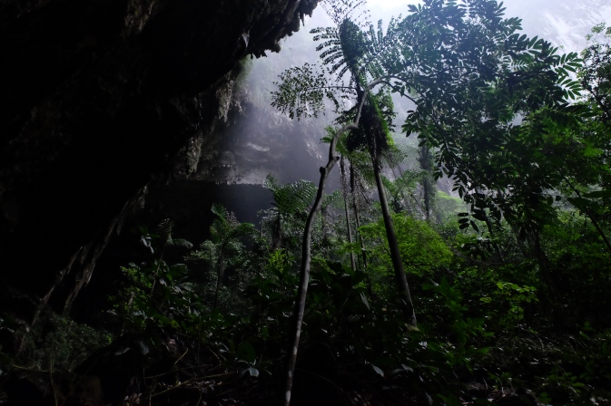 Rainforest around Mulu caves - Sarawak