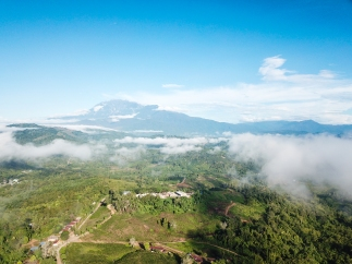 Sabah Tea aerial view with Mount Kinabalu in background