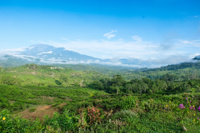 Sabah Tea Gardens with Mount Kinabalu in background - view from cottage