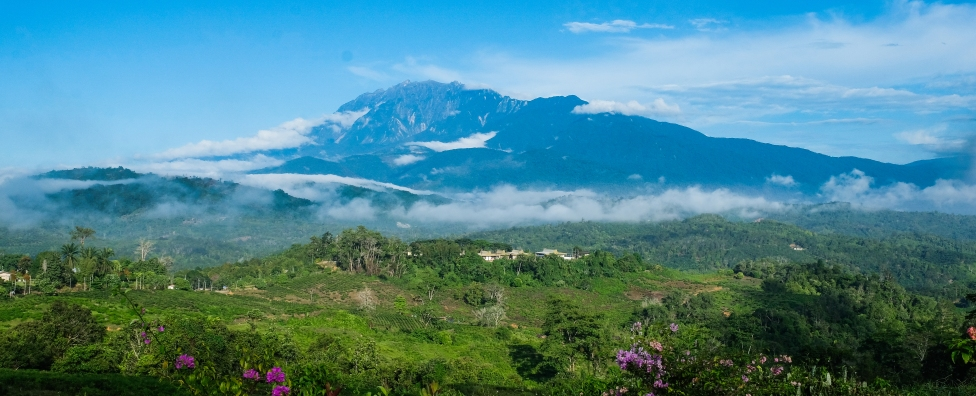 Morning view from Colonial Cottage over plantation and Mount Kinabalu