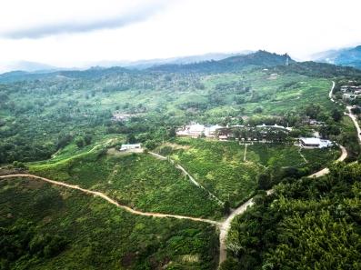 Aerial view of Sabah Tea Gardens