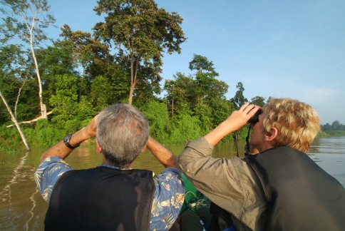 Bird watching at Sukau Rainforest Lodge