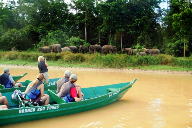 Borneo pygmy elephant (3)