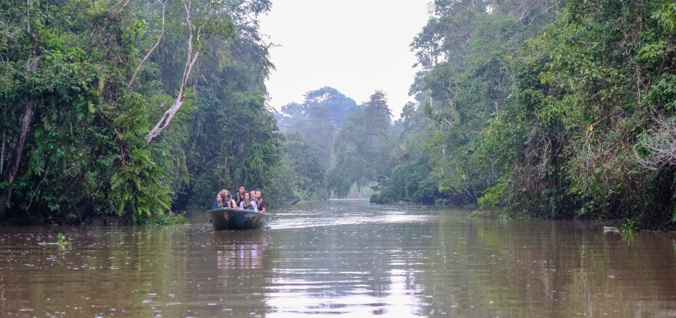 Nature cruise - Kinabatangan