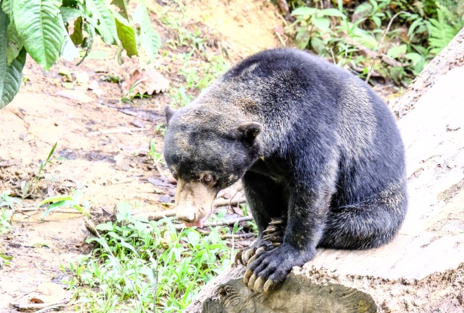 Bears can get a little muddy searching for yummy tidbits underground